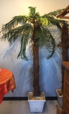 Rental store for PALM TREE 6FT in Whitefish MT